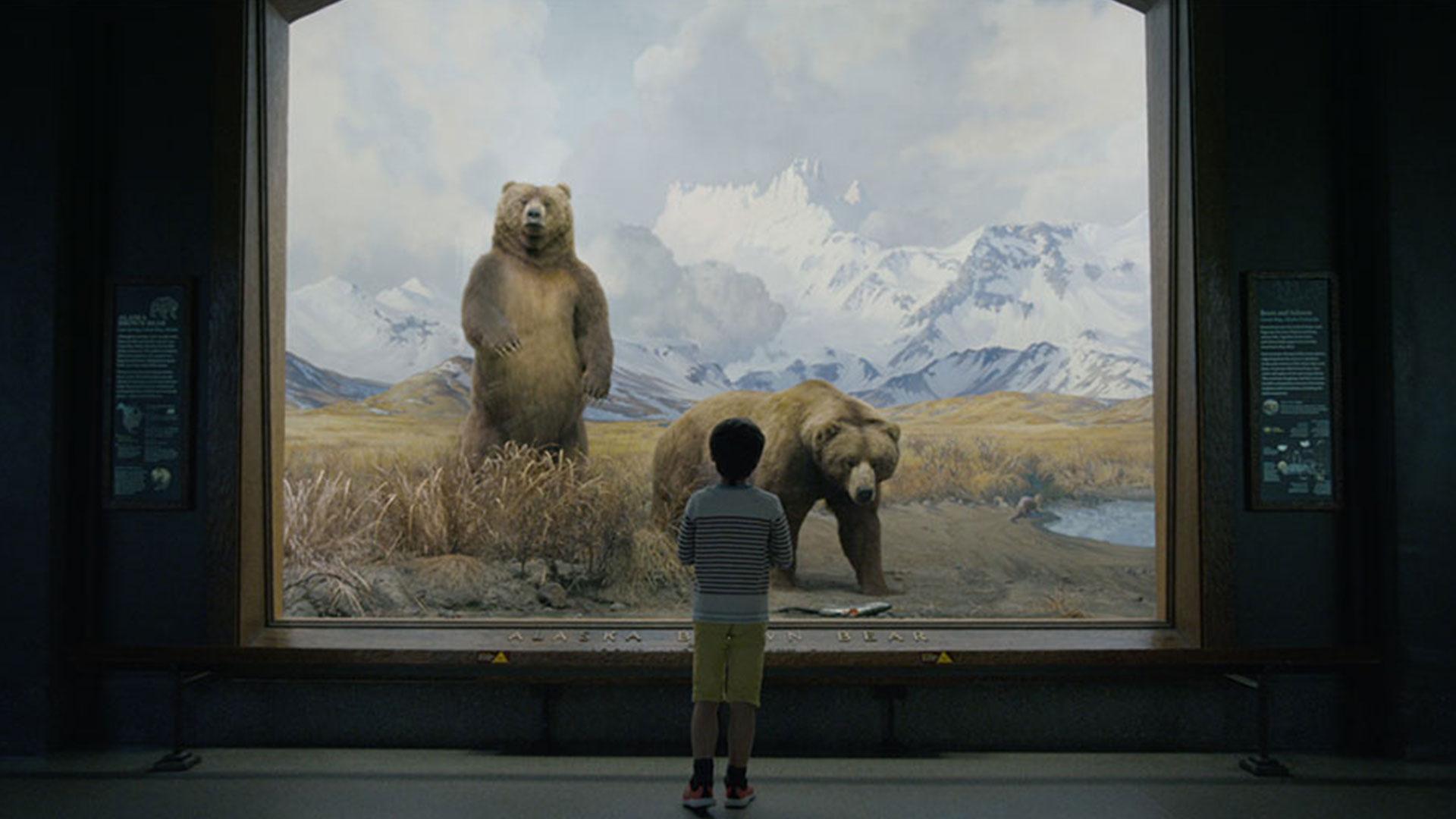 window mammal painting bear animal art